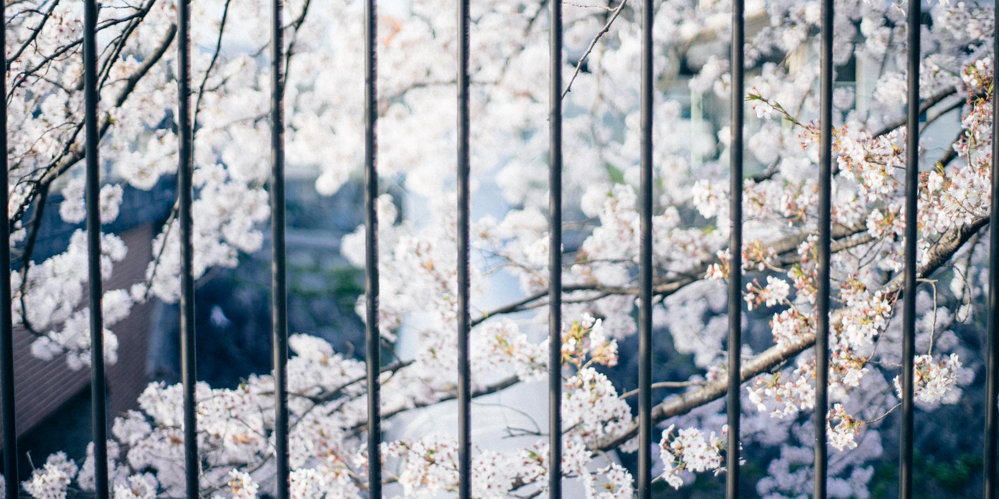 大阪 カメラ&写真サークル「銀板倶楽部」